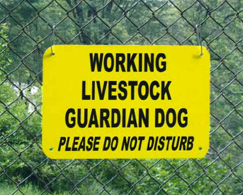 Farm Sign: WORKING LIVESTOCK GUARDIAN DOG - Please Do Not Disturb